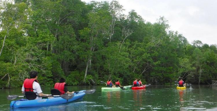 Mandai Mangroves on Kayaking experience