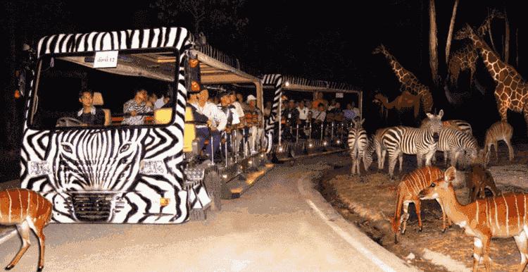Night Safari Adventures