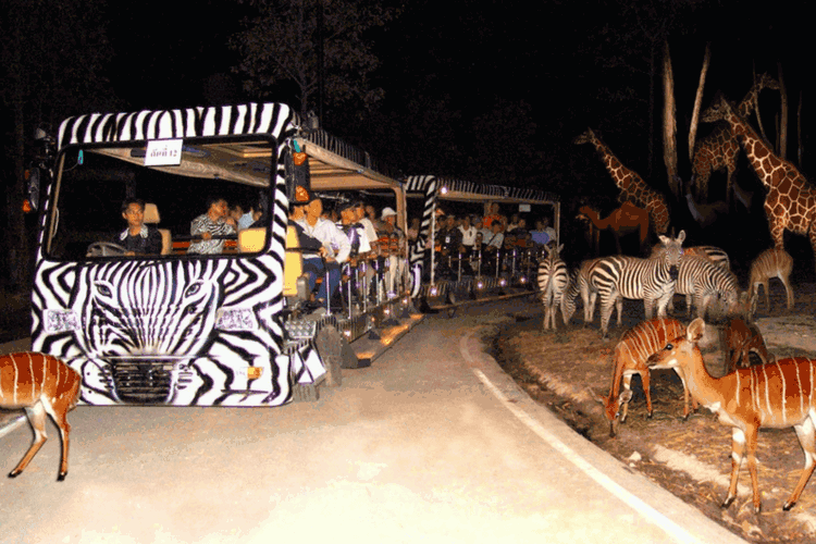 Night Safari Adventures 6 Reasons why it is a Good Idea to visit Singapore during off season