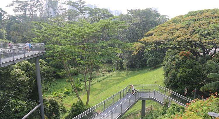 Rainforest Southern Singapore
