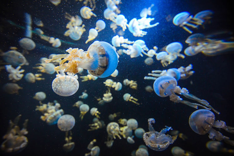 Sea Aquarium Singapore 6 Reasons why it is a Good Idea to visit Singapore during off season